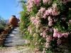 01 Escada da Piscina para o Roseiral