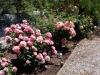 32 Roseiral em flor / Rose garden