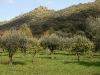 41b Vista do Laranjal / View of the Grove